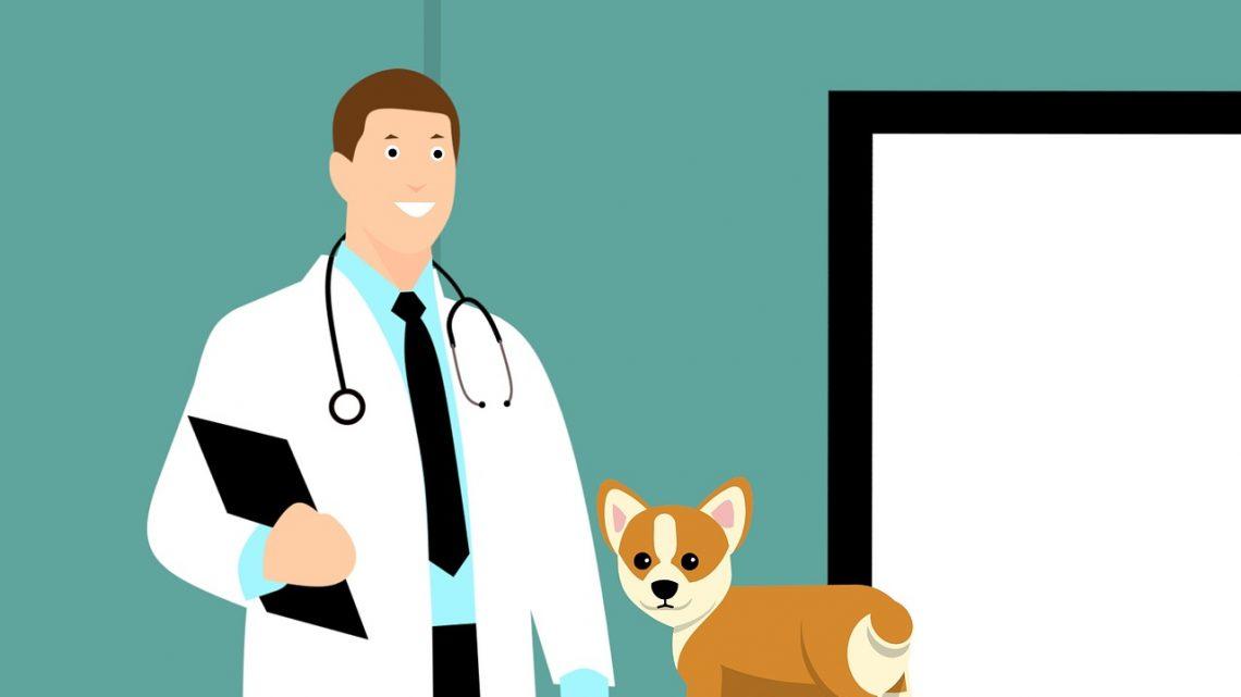 Un service d'appel disponible pour les urgences vétérinaires