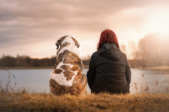 Les meilleurs films et séries de chiens sur Netflix