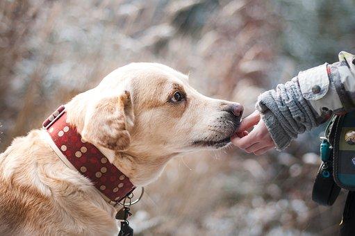 Comment agir vite dans les cas d'urgence animalière?