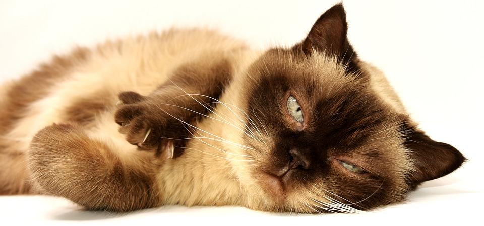 Quelles sont les cas où l'on peut faire appel à un soigneur animalier ?