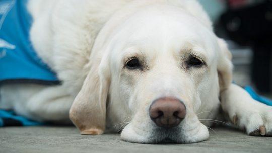 Comment savoir si votre chien est malade?